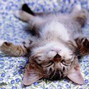 KittenBack_Sleep_MAr2010